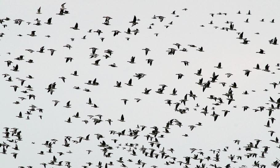 Почемучка: как птицы понимают, куда лететь на зимовку?