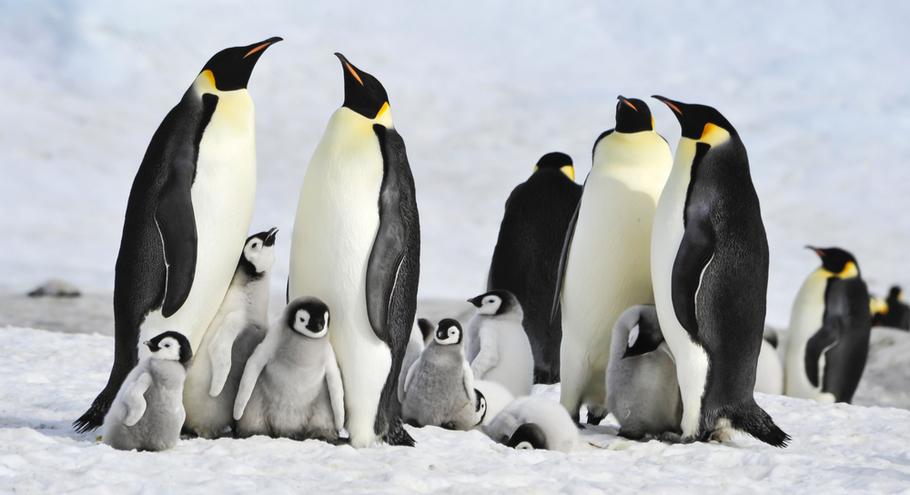 Про животных: пингвины