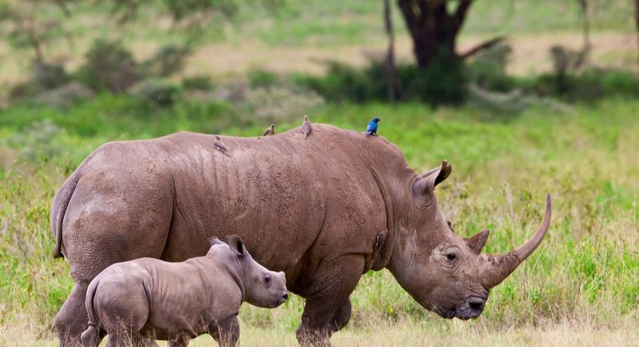Про животных: носорог