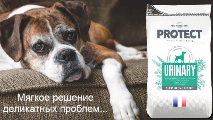 Чем правильно кормить собаку при мочекаменной болезни
