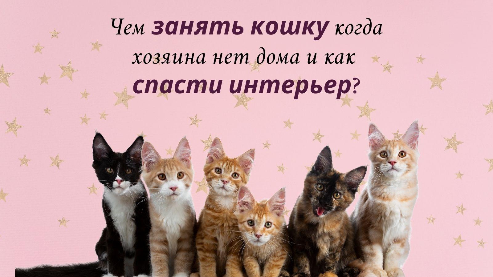 Чем занять кошку, чтобы она не скучала и как спасти интерьер?