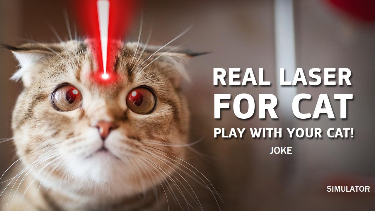 Лазерная указка для кошек: обзор лучших лазеров