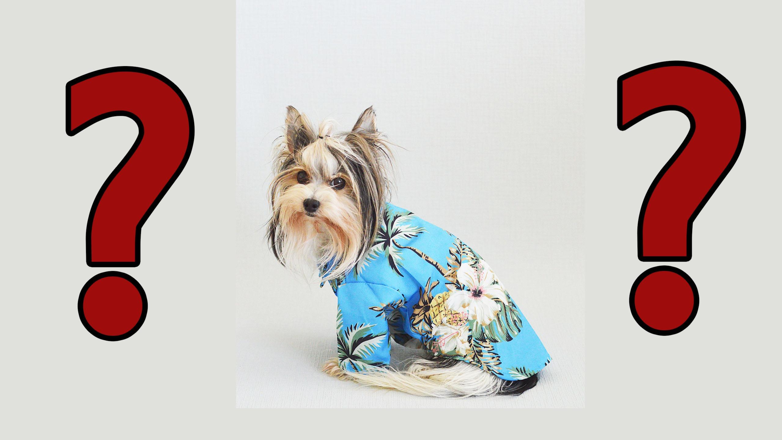 Зачем одевать собаку летом и осенью? Разбираемся с точки зрения научного подхода