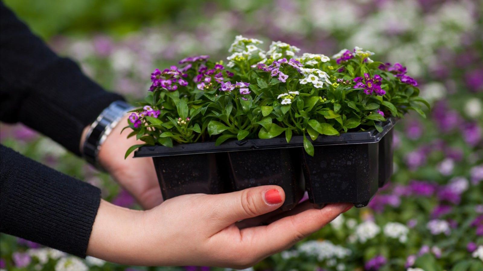 Цион - лучшие витамины для ваших цветов