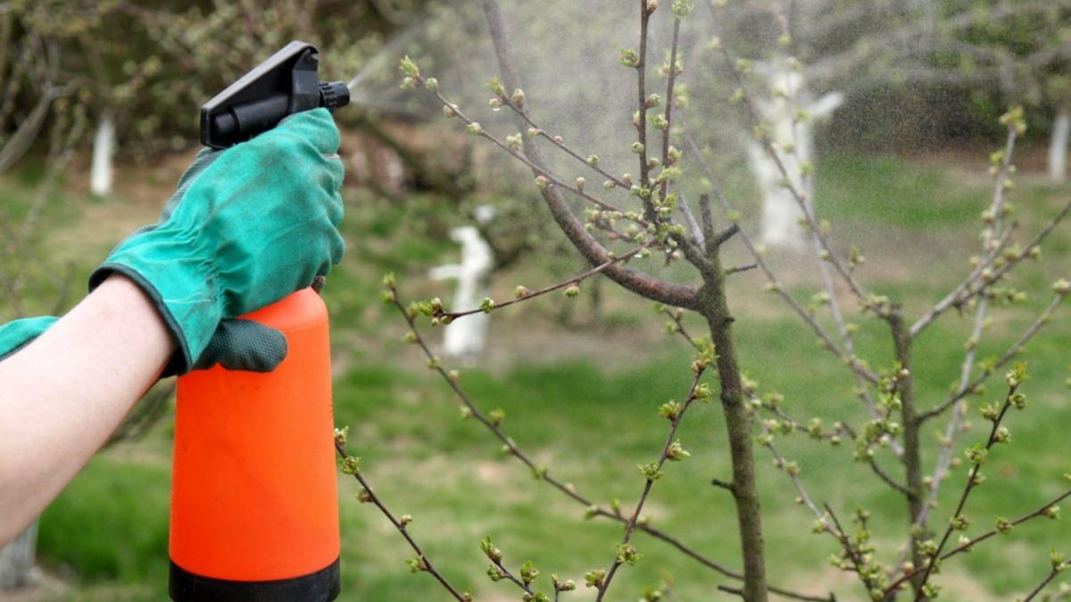 Эффективное применение борной кислоты для растений.