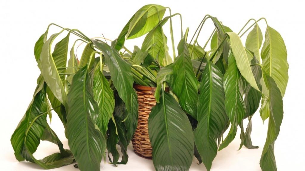 Удобрение МЕРА — №1 для яркой жизни растений!