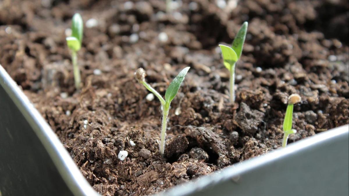 Биостимулятор для крепких и здоровых растений