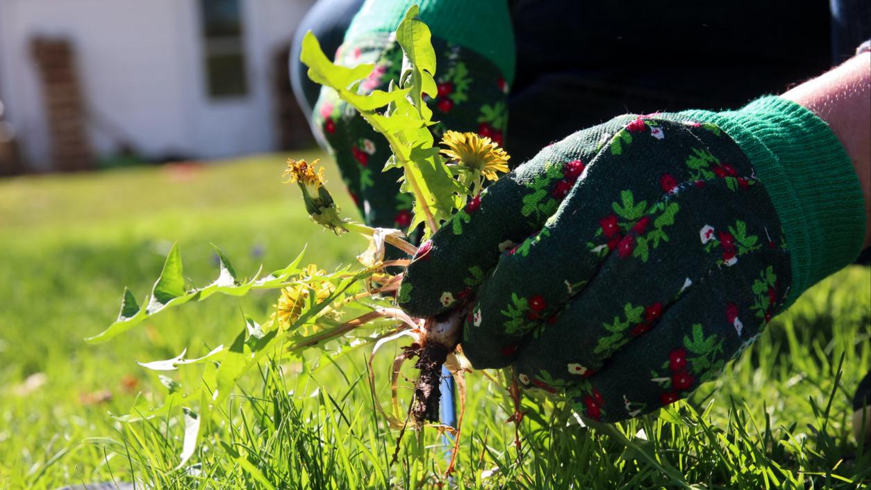 Стриж - истребитель сорняков