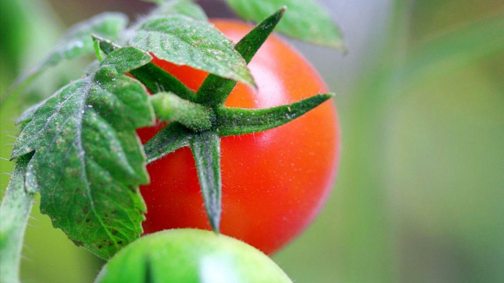 Урожай на балконе - это легко!