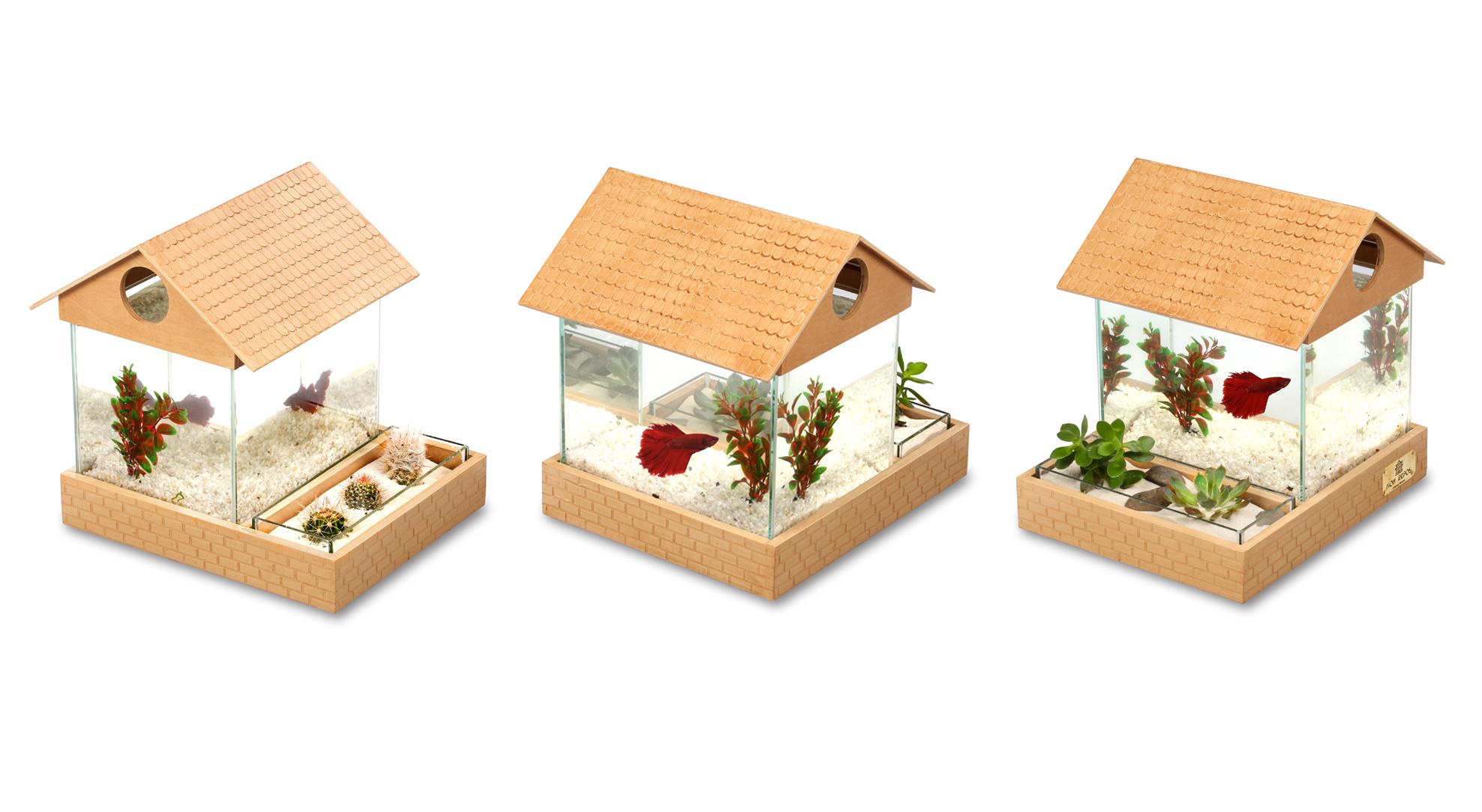 Аквариум для начинающих, с емкостью для растений.