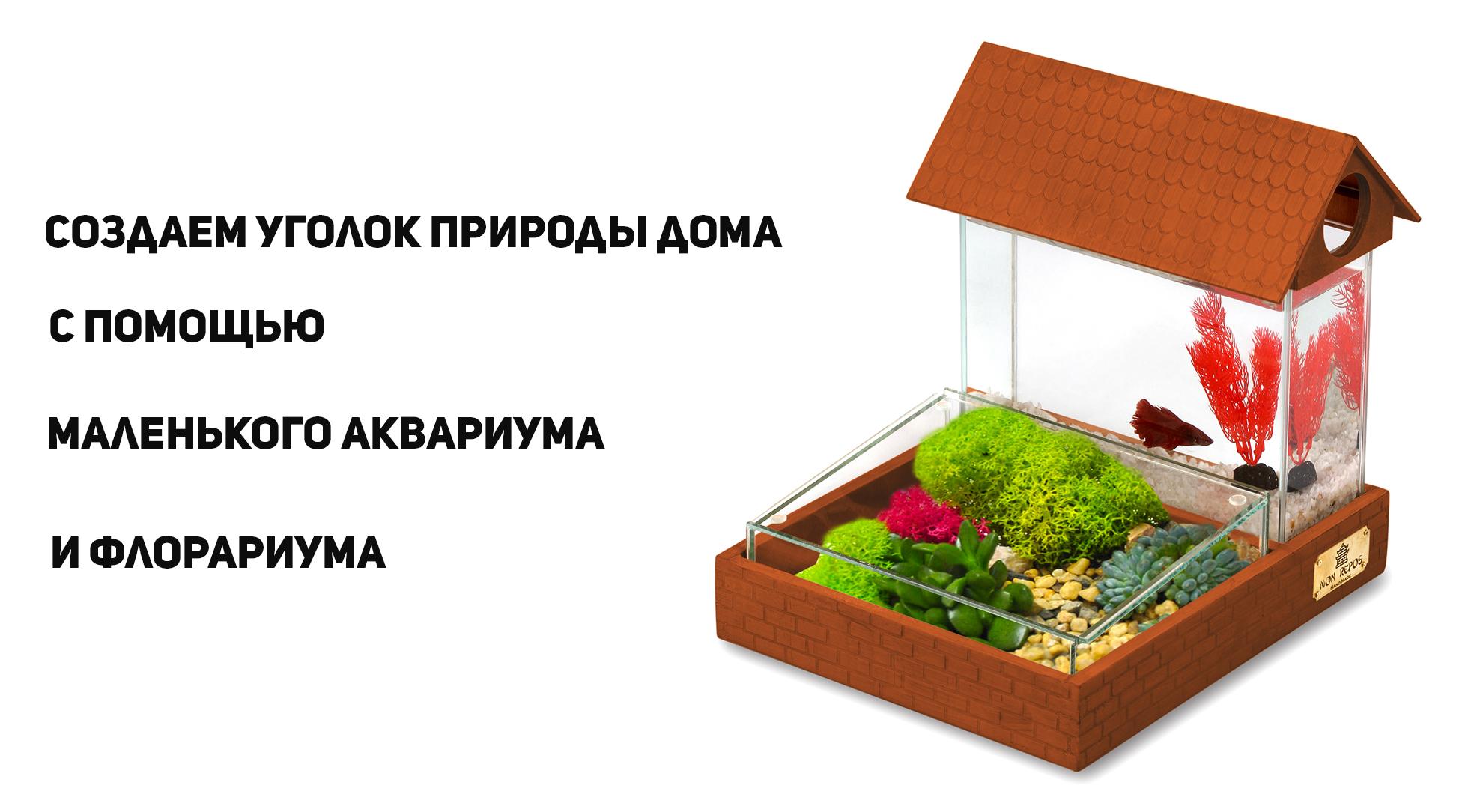 Создаем уголок природы дома с помощью маленького аквариума и флорариума