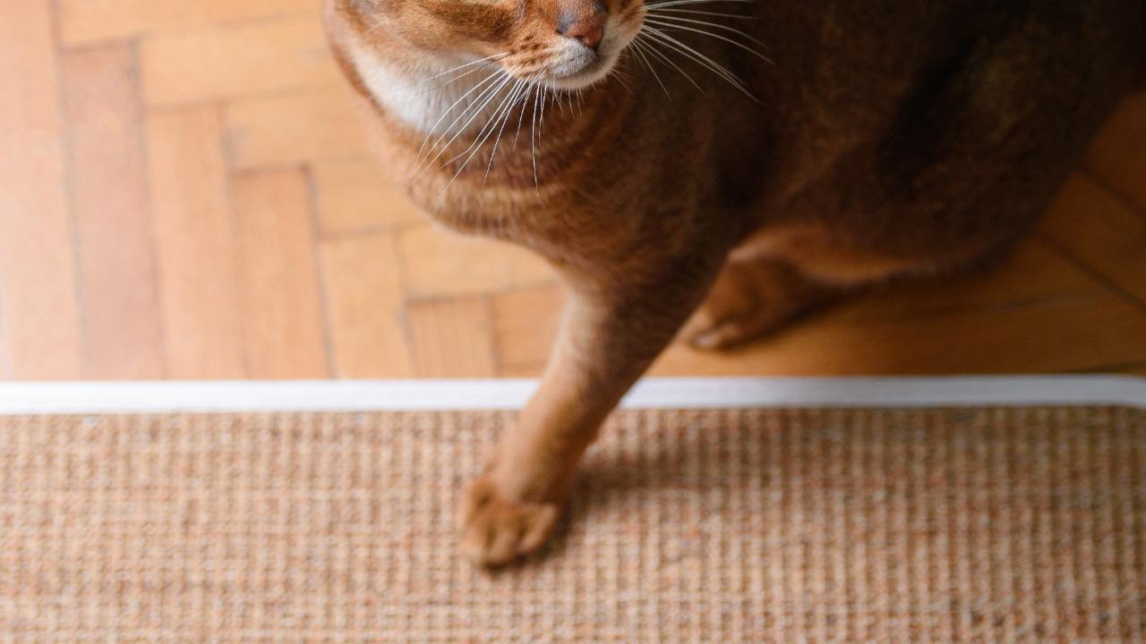 Как приучить кошку к когтеточке — 3 простых шага