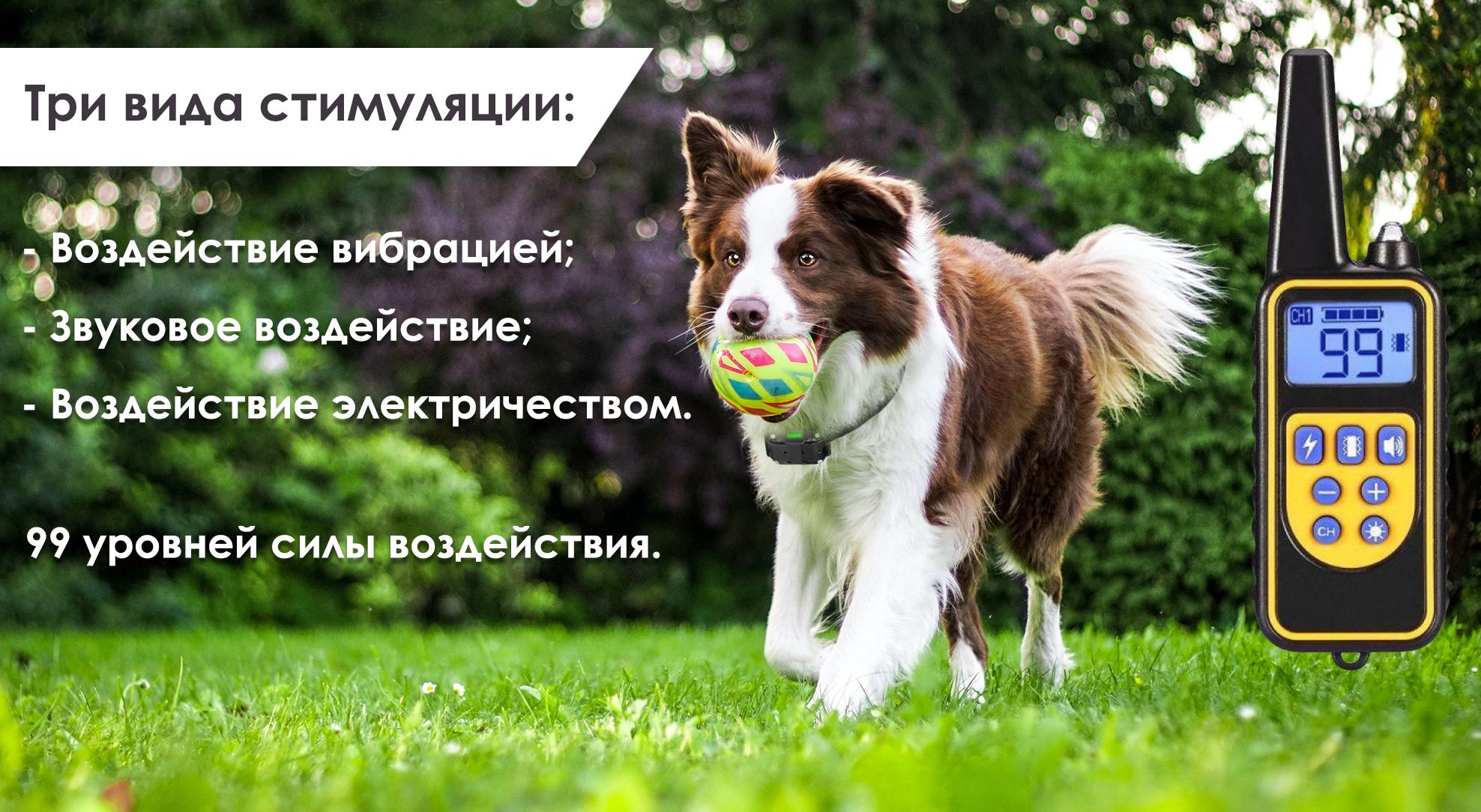 Послушная собака без вредных привычек