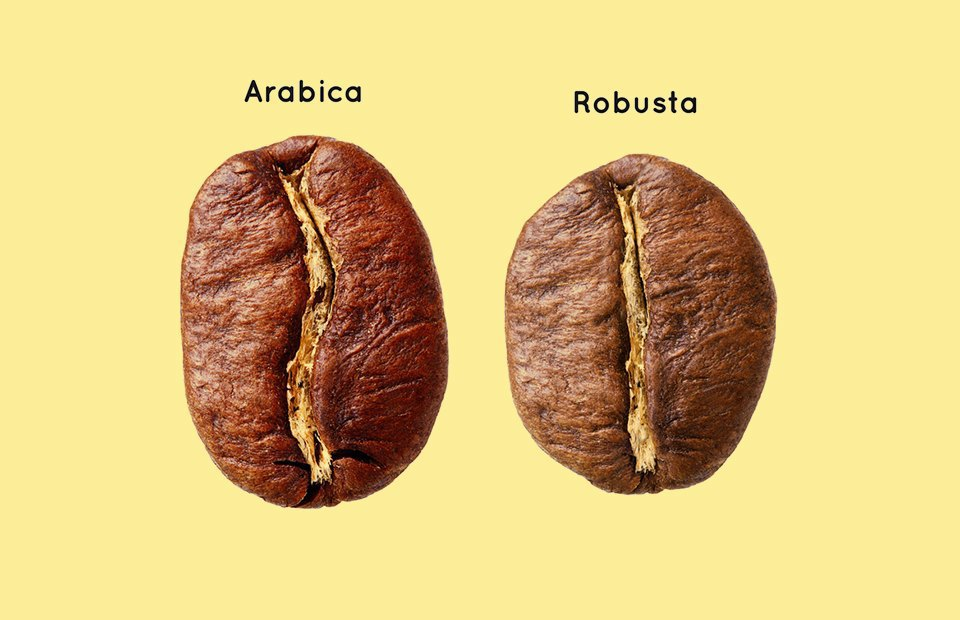 Кофейная битва: Арабика против Робусты.